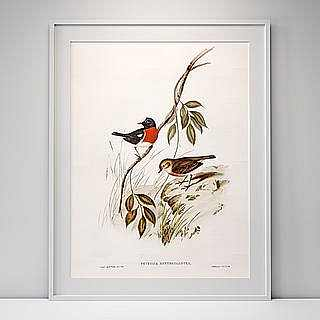 Pecan birds